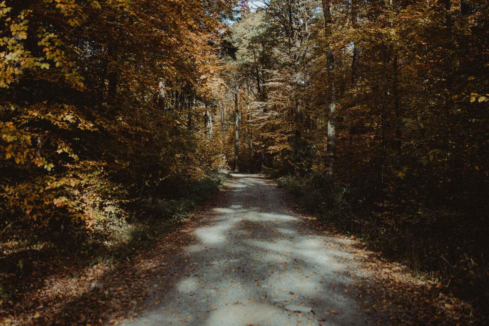 Der Rutesheimer Wald im Herbst
