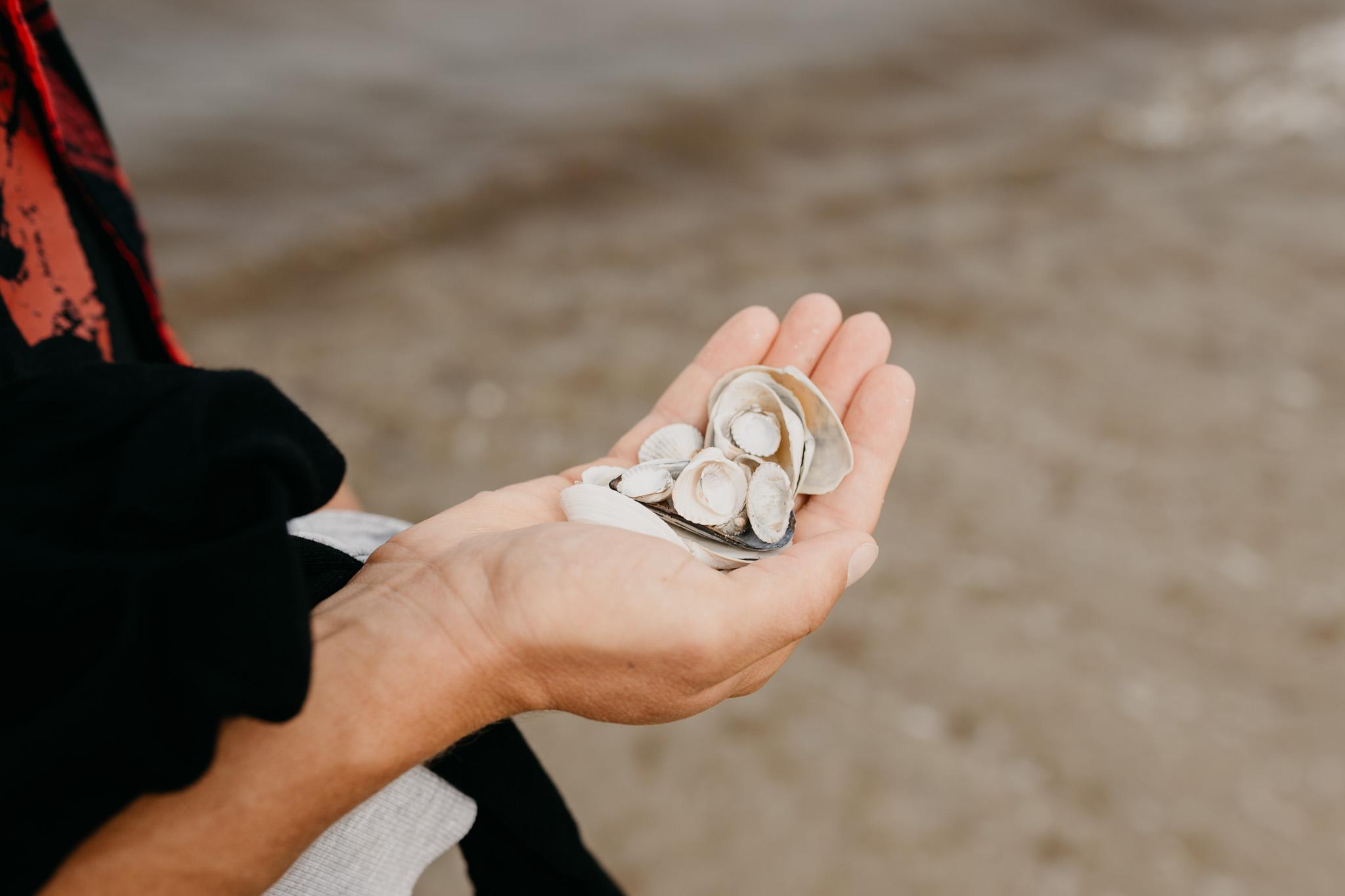 Eine Hand voller Muscheln