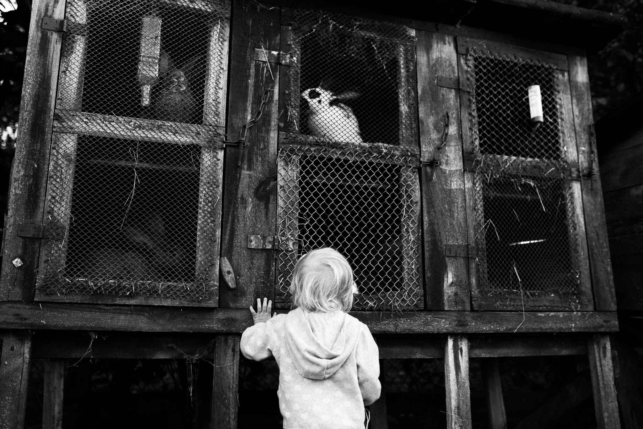 Kind steht vor einem Hasenstall / schwarzweiß