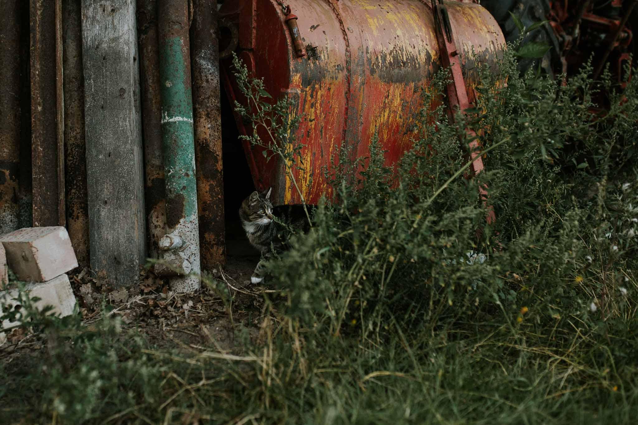 Katze auf dem Bauernhof