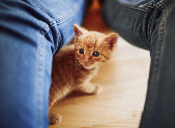 kleines orange getigertes Kätzchen